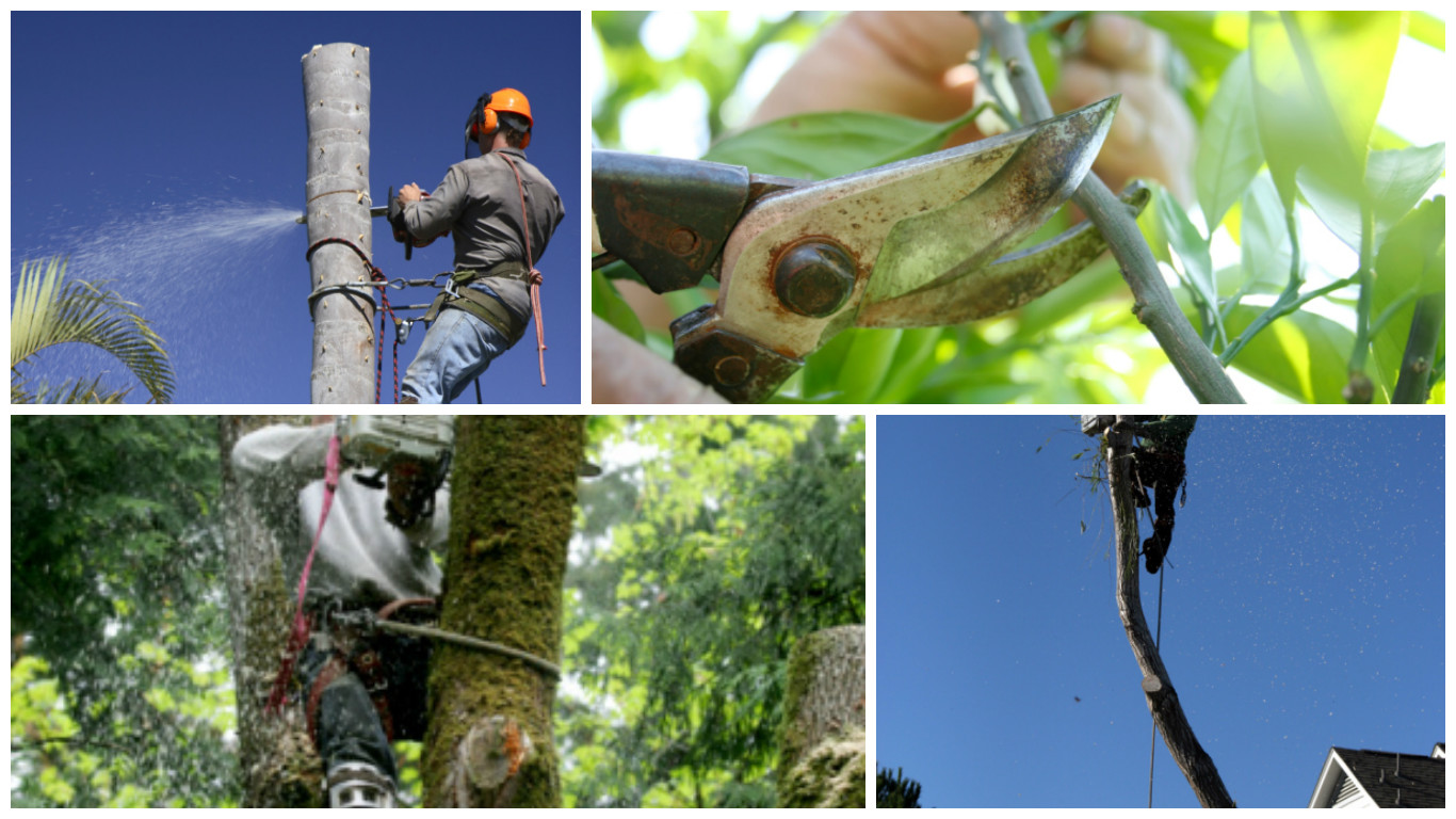 Scott Lorenz Tree Service of Royalton