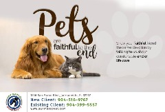 Veterinary Clinic - San Marco Animal Hospital