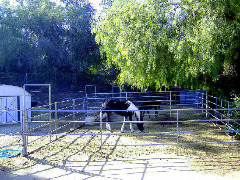 Horse Boarding 36 ft x 36 ft Corrals $160 With Hay (2 flakes per day) Riverside / Norco
