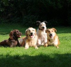 Get Best Dog Poop Removal Service Near You