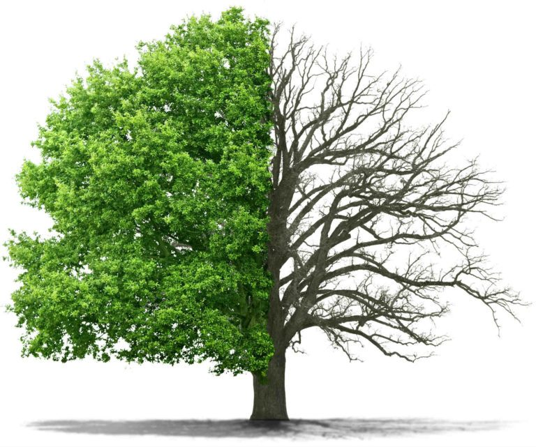 William Tree Service