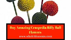 Whole Blossoms Provides Billy Ball Flowers at the Incredible Price