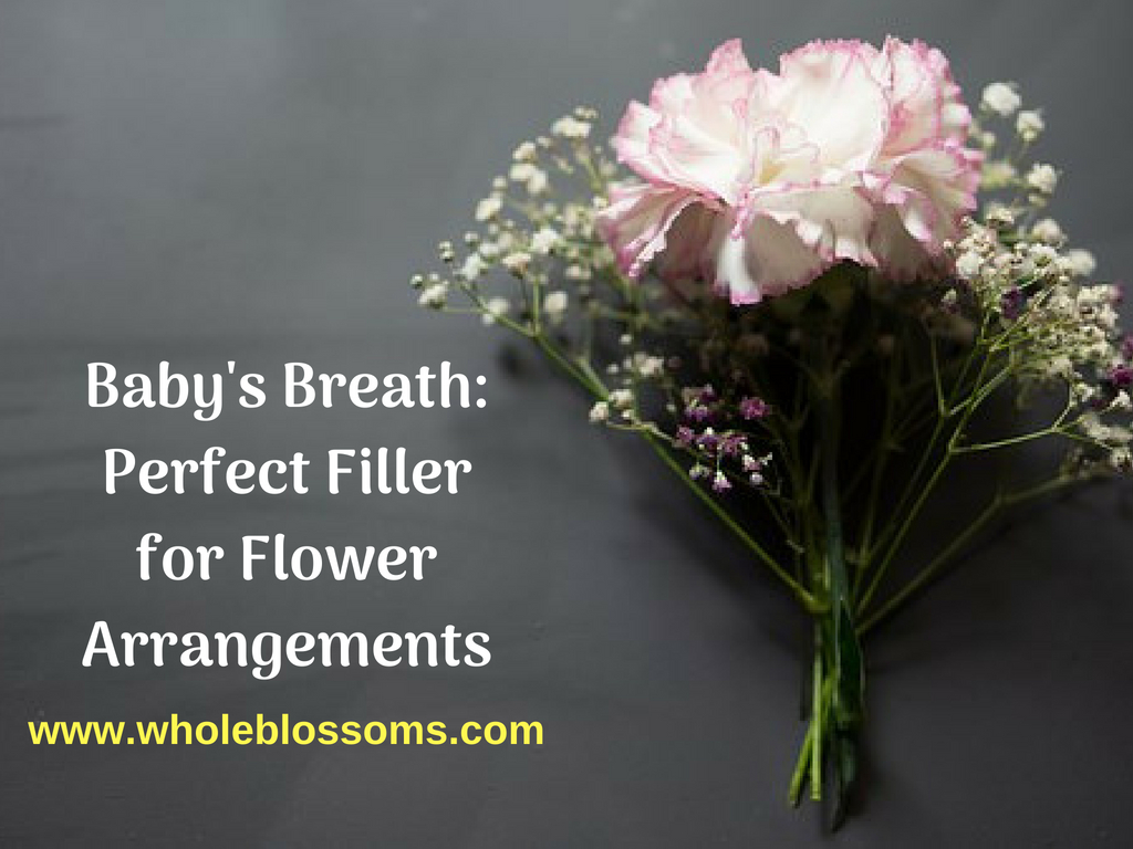 Order Fresh Baby's Breath in Bulk from Whole Blossoms