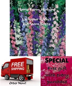 Larkspur Rocket Heirloom Seeds, Order now, FREE shipping + a free gift