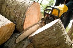 Progressive Tree Care San Juan Capistrano