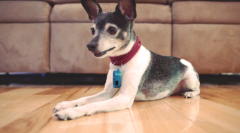 Does Your Pet Have A Training Collar? Buy Dog Training Collars Now