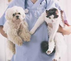 Find Diagnostic Services for Pets Jacksonville FL- Dr. Venkat Gutta- Local Veterinarian