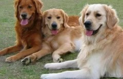 Avail Low cost pet vaccinations at your home.