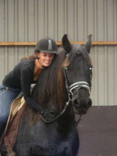 Amazing And Energetic Friesian Horse For Sale..