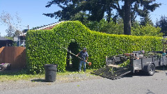 Juan's Landscaping and Cutting Trees Contractor