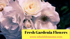 Order Gardenia Flowers from Whole Blossoms at the Best Prices