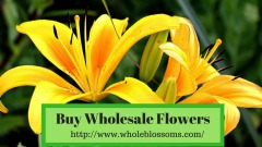 Buy Premium Quality of Bulk Flowers Online at Lowest Prices