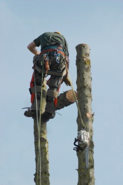 Brisas Tree Service