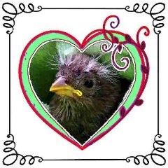 A Sparrow named Raina