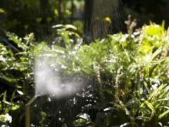 Safe Tick Spray | Mosquito Control Company | Tick Control Services | Organic Mosquito Services
