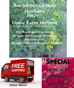 Order Rue, Medicinal Herb Heirloom Seeds now, FREE shipping and a Free Gift