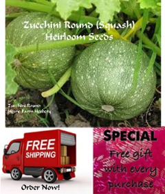 Zucchini Round (Squash) Heirloom Seeds, Order now, FREE shipping & free gift!