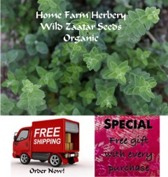 Zaatar Wild (Oregano) Seeds Order now, Free shipping + free gift