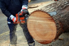 Drury Tree Service in Maryland Heights