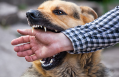 Animal Bite Attorneys in Denver and Aurora, CO – AGG Law Firm