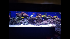 130 gallon salt water aquarium fish tank