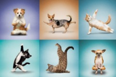 Health Supply for Animals – Holistic Pet Care
