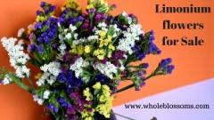 Grab the best deal on limonium flower