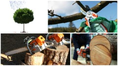 East Coast Tree Surgeons LLC