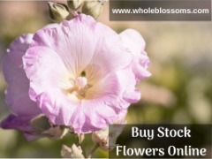 Buy Wholesale Stock Flowers Online