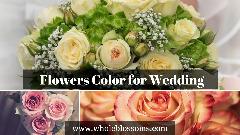 Order Perfect Flower Wedding Colors for Your Wedding Decoration