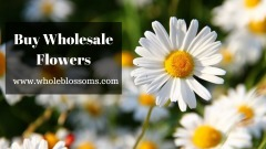 Purchase wholesale flowers for making beautiful centerpieces