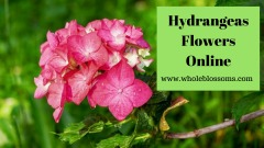 Buy fresh hydrangeas flowers from Whole Blossoms