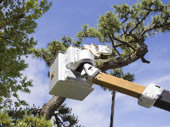 Carolina Tree Service