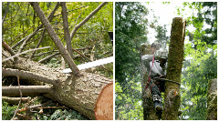 J&J Tree Services