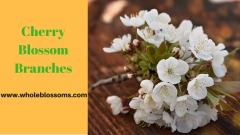 Buy Gorgeous Branches and Cherry Blossom Branches at the Best Prices
