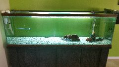 fishs tank