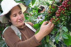 Wholesale coffee bean suppliers & buy coffee online sale Truckee,CA