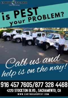 Don't Hesitate, One Call Cures All Your Pest Problems