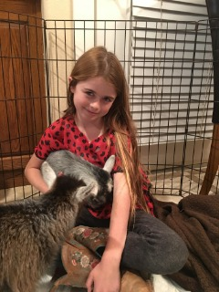 Want a truly exotic pet? One that is great with children?  African Pygmy Goats