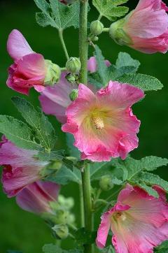 Order Bulk Flowers Online for Sale