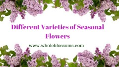 Order Fascinating Winter and Spring Wedding Bouquets from Whole Blossoms