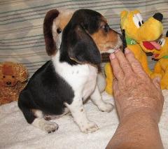 IZO Beagles 31 Champions - Charity