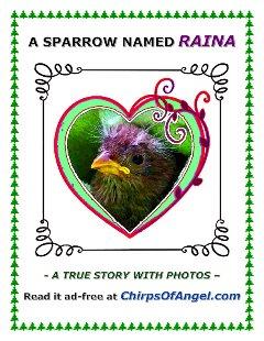 Read A Sparrow named Raina