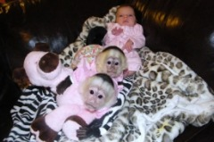 I have male and female capuchin monkeys ready