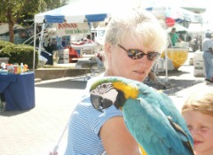 FRIENDLY BLUE AND GOLD MACAW!