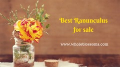 Purchase Exquisite colur varities of ranunculus flower