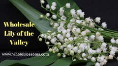 Buy wholesale lily of the valley for decoration purposes