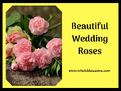 Order Roses Online in Bulk at the Cheap Price