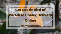 Order Bird of Paradise for Sale Online from Whole Blossoms