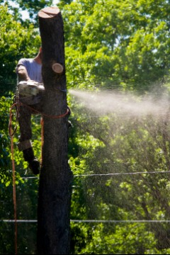 Brothers Tree Service and Landscape Inc